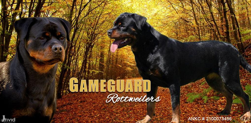 Gameguard Kennels