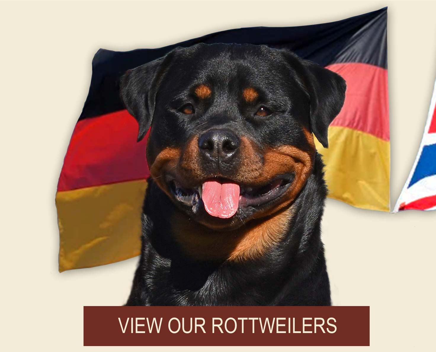 View our Rottweilers